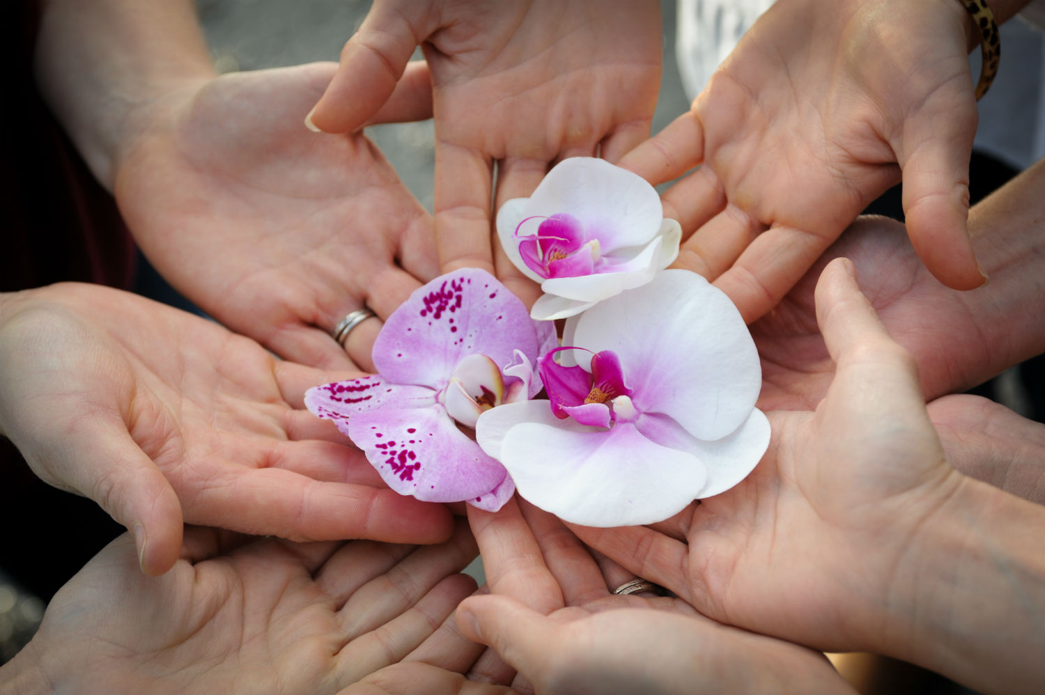 Moonstone Midwives hands in a circle holding white and pink orchid flowers.